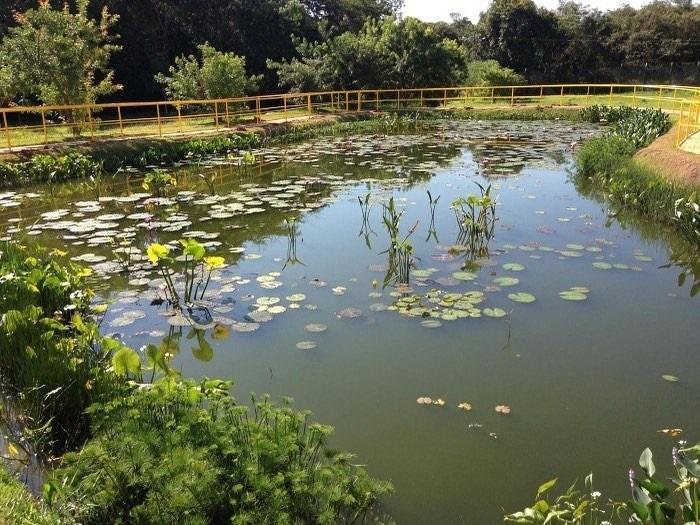 Resultado de imagem para Assinada ordem de serviço para a construção de jardins filtrantes nos Parques da Cidade e Pajeú
